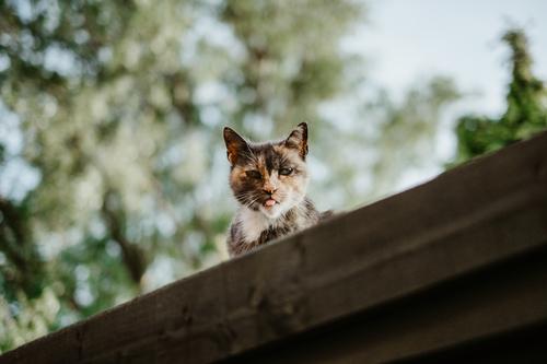 Cat_peeking_above_the_roof_28Unsplash29