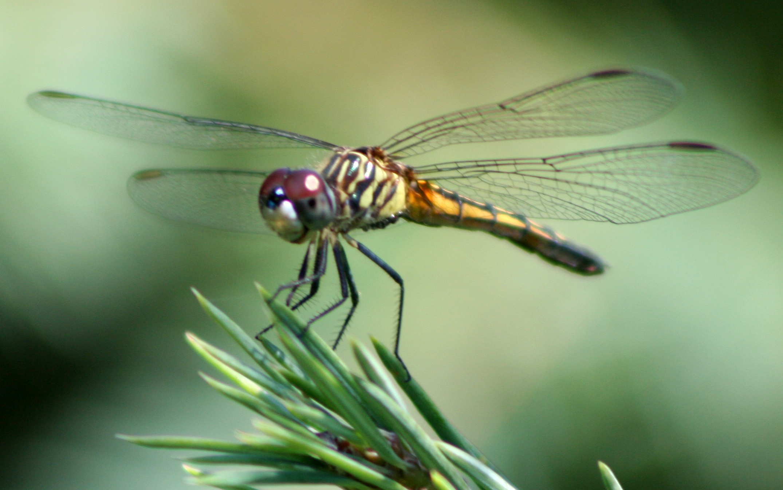 Dragonfly_ran-387