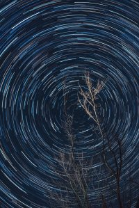 long-exposure-of-photography-of-brown-tree-3536526