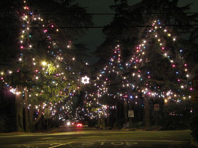 800px-Christmas_Tree_Lane